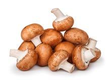 Big pile of brown mushrooms Royalty Free Stock Images