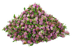 Big pile of clover flower bud Royalty Free Stock Images