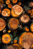Big pile of cut tree trunks for the background. Royalty Free Stock Photo