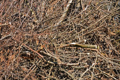 Big pile of dried tree branches Royalty Free Stock Photos