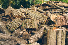 Big pile of felled logs and stumps is outdoors. A large pile of freshly cut logs and stumps in the open air Stock Photos