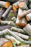 Big pile of firewood. Big pile of firewood for fireplace. sawn tree trunks red aspen piled in a heap Stock Image