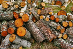 Big pile of firewood. Big pile of firewood for fireplace. sawn tree trunks red aspen, piled in a heap Stock Photo