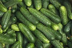 Big pile of fresh green cucumbers Stock Photo