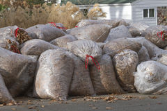 Big Pile of Leaf Filled Bags Royalty Free Stock Photos