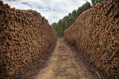 Stacked Logs royalty free stock photography