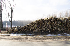Big pile of logs felled around the country road Royalty Free Stock Photos