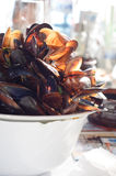 Big pile of mussel shells royalty free stock photo