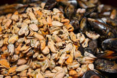 Big pile of peeled and whole mussels Royalty Free Stock Images