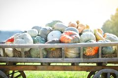 Big pile of pumpkins on hay in a wooden cart the season of harvest. Happy Thanksgiving Day. Harvest festival. royalty free stock photography