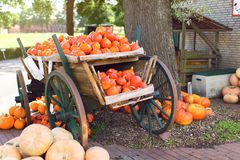 Big pile of pumpkins in a wooden cart royalty free stock images