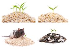 With a big pile of seed plant grows,collection Stock Images