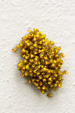 Big pile of small yellow young spiders Stock Photo