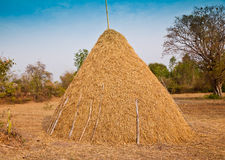 Big Pile of Straw Royalty Free Stock Images