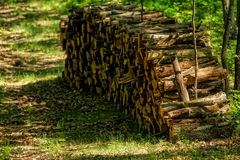 Big pile of wood Stock Photo