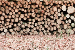 Big pile of wood in autumn forest Stock Photos