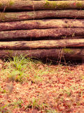 Big pile of wood in autumn forest Stock Image