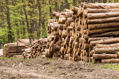 Big pile of wood Stock Photo