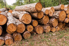 Big pile of wood Stock Image