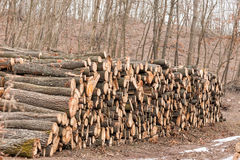 Big pile of wood Stock Photography