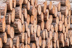 Big pile of wood Royalty Free Stock Photography
