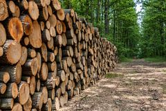 Big pile of wood in the forest Royalty Free Stock Images