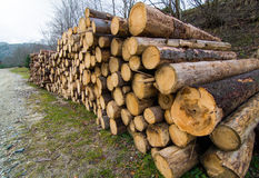 Big pile of wood in a forest road Stock Photography