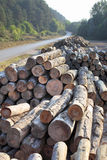 A big pile of wood Stock Photo