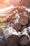 A big pile of wood Royalty Free Stock Images