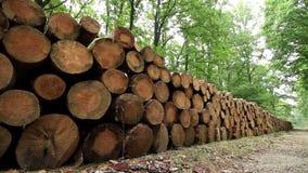 Big pile of wood stock footage