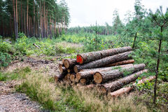 A big pile of wood in a forest road Stock Photos