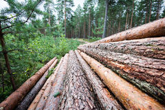 A big pile of wood in a forest road Royalty Free Stock Image
