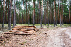 A big pile of wood in a forest road.  Royalty Free Stock Photo