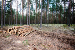 A big pile of wood in a forest road Stock Images