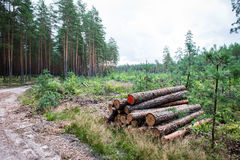 A big pile of wood in a forest road.  Royalty Free Stock Photos