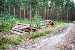 A big pile of wood in a forest road.  Stock Photos