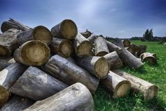 Big pile of wood in the green. Pile of wood, lumber, in the green under beautiful blue sky Stock Image