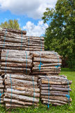 Big pile of wood logs Royalty Free Stock Photo