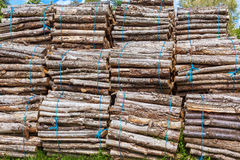 Big pile of wood logs Royalty Free Stock Images