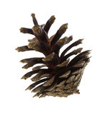 Big pine cone Stock Photography