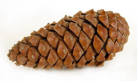 Big pine cone Royalty Free Stock Photography