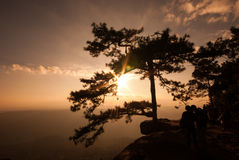 Big pine on the mountain during sunset Royalty Free Stock Image