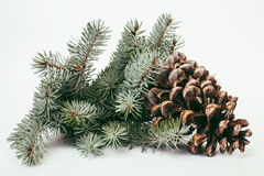 Big pine tree cone like decoration to holiday card Stock Image