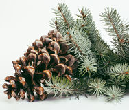 Big pine tree cone like decoration to holiday card Stock Photo