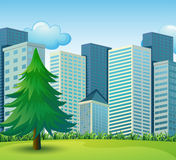 A big pine tree growing near the tall buildings Stock Image