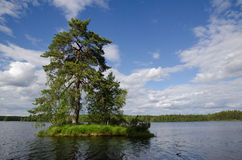 Big pine tree at small island Royalty Free Stock Photography