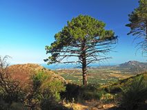 Big pine tree with view from the hill on coastal landscape sea and blue sky on GR 20 famous trek. France, Corse, Haut Corse, June 12, 2017: big pine tree with Stock Photo