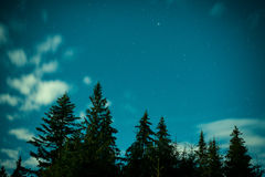 Big pine trees under blue night sky Stock Photography
