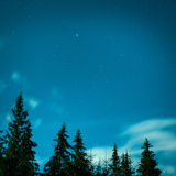 Big pine trees under blue night sky Stock Images