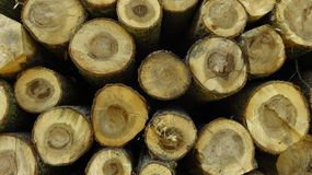Wood Logs In Large Woodpile for Background royalty free stock image